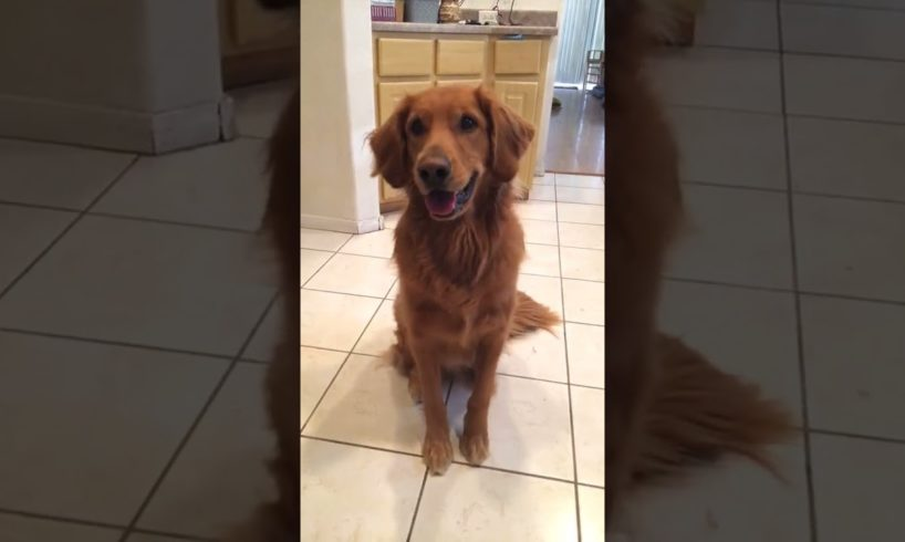 Best Cute Puppies Doing Funny Things|Cutest Puppies 2021#577.