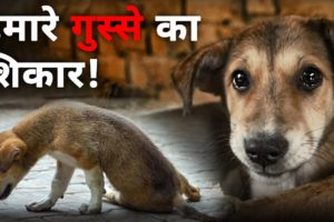 Best way to deal with angry people | Dog Rescue | Robin Singh