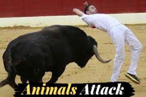 Bull Race | Fails of The Week | In English In Urdu | Lovewalisarkar