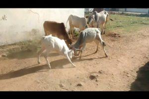 CRAZIEST Animal Fights Caught On Camera