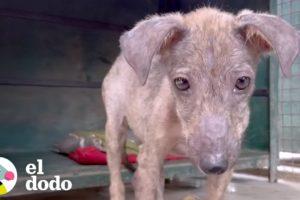 Cachorro asustado vuela por todo el mundo hacia su hogar para siempre | El Dodo