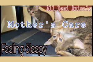 Cat And Dog Playing||Kitten||Cat||Dog||Feeling Sleepy||Shorts||All_Desi Animals||