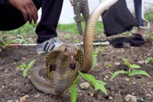 Cobra atrapada bien recibe ayuda - y una invitación para volver a casa | El Dodo