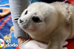 Cría de foca valiente se mejora y lleva a sus amigos de regreso a casa | El Dodo