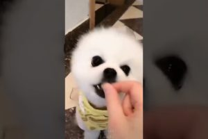 Cute Puppies Doing Funny Things Cutest Dogs🌸 #short