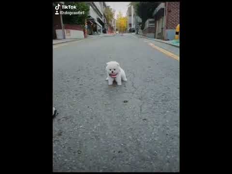 Cute Puppies Doing Funny Things|Cutest Puppies 2021#451.