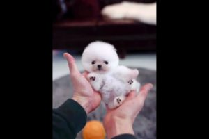 Cute Puppies Doing Funny Things Cutest Puppies 2021#490.
