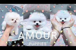 Cute puppies || cutest puppies ever || cute compilation || cute baby dogs