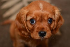 Cutest Puppies Compilation - Try Not To Feel Good When Watching!