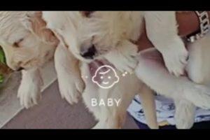 Cutest Puppies 😻❤️ #shorts #doglover  #tuckerbudzyn  #tucker