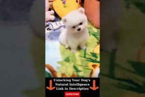 Cutest Puppy in The World | Cute Puppy Moments #shorts
