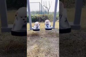 Cutest puppies #shorts #youtubeshorts #cutepuppies #cutedogs #cuteanimalvideos #cuteanimals