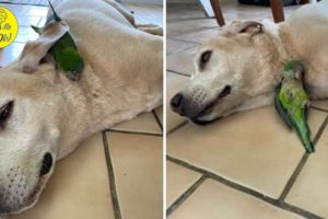Dog Rescues Injured Baby Bird And Becomes Her Big Brother