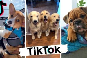 Dogs Doing Funny Things Tik Tok ~ Cutest Puppies TIKTOK Compilation ~ Fluppy