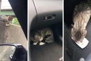 Driver Rescues Terrified Cat Stranded On Highway