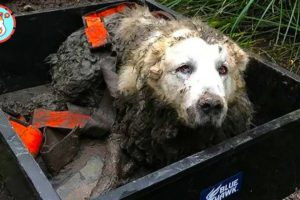 Epic Puppy Rescue ★ Save Dog Trapped In Muddy Pond