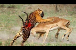 Extreme Animal fights 2021    #ItsAnimals #AnimalFights