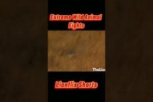 Extreme Wild Animal Fights!!! pt7