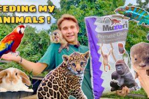 FEEDING ALL MY BACKYARD ANIMALS !