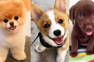 FUNNY AND CUTE PUPPIES 🐶 - TOO MUCH CUTENESS IN THIS VIDEO!!! ❤️ I Funny Pets