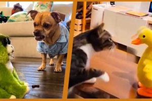FUNNY ANİMALS VİDEOS, DOGS AND CATS VİDEOS COMPİLATİON   TRY NOT TO LAUGH #2