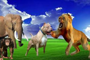 Forest Animals Elephant - Monkey- lion - Dog playing with each other, animals video, farm animals