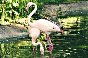 Funny Animals in 1 minute.  Flamingo Sweet Dance #4