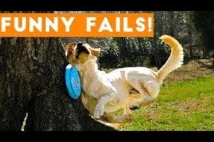 Funny dog fail compilation 2021 . Fail of the week!! #Legendaryfail  #failarmy #fail