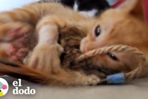 Gente detiene el tráfico para rescatar a un gatito de una autopista transitada | El Dodo