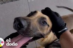Hombre en motocicleta rescata a dos perros metidos en el tráfico | El Dodo