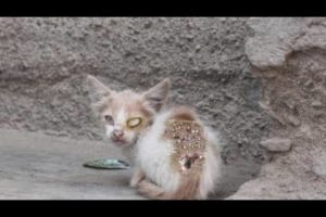 Hopeless Hunger Mother Cat Rescued From Huge Maggots - Animal Rescue Videos