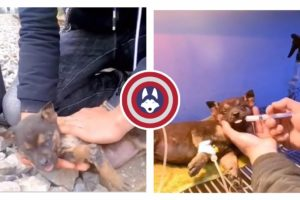 Inspiring Animal Rescues and Cure Compilation | Captain Animals
