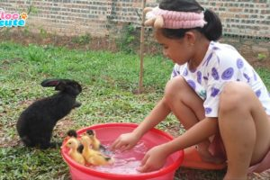 Loc Cute bunnies plays with little ducks in the bath in animals home