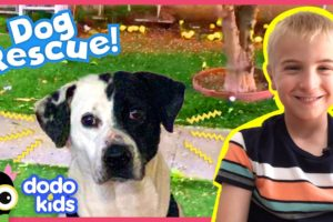 Mark The Dog Is Afraid Of Everything Except Hamburgers | Animal Videos For Kids | Dodo Kids
