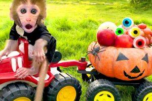 Monkey Baby Bon Bon and puppy play with Halloween Pumpkin car and eat Eyeball Jelly