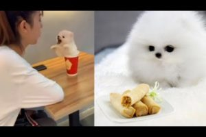 NEW cute puppies💖 | Funny puppy #funny #cute #must
