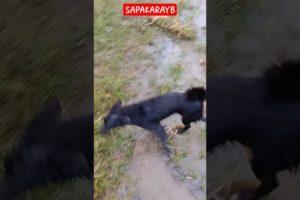 Near death captured
