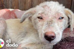 Niños rescatan a un cachorrito que vive solo | El Dodo