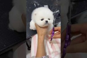 OMG Cute Puppies || Cutest Animals || Lovely Kity || Video #6