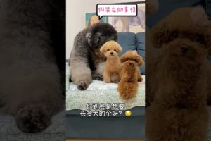OMG So Cutest Puppies 2021🥰#55 Funny and 😍Cute Pomeranian