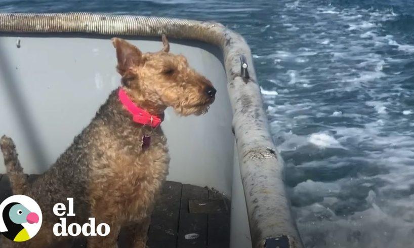 Perrita viaja con su papá nuevo en bote de pesca   El Dodo