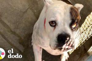 Perro abandonado en el refugio descubre el aire libre | El Dodo