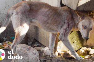 Perro de ojos azules y con sarna fue tirado en la calle | El Dodo