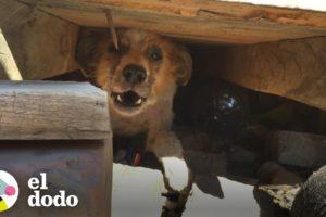 Perro renunciado por ser viejo es un cachorro de nuevo | El Dodo