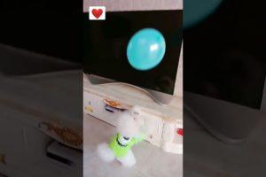 So Cute Puppy Playing  || Cute Animals #shorts