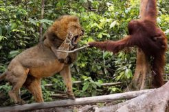 TOP 10 ANIMAL FIGHTS I JUST FOUND