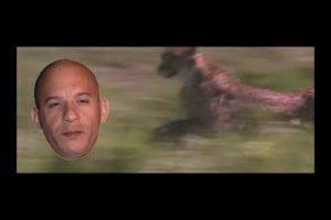 The Best of Animal Fights - Animal Planet (Cheetahs, Crocrodiles, Wilderbeasts, Zebras)