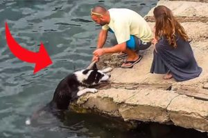 This Is Why Animals Love Us | Heart Warming Animal Rescues