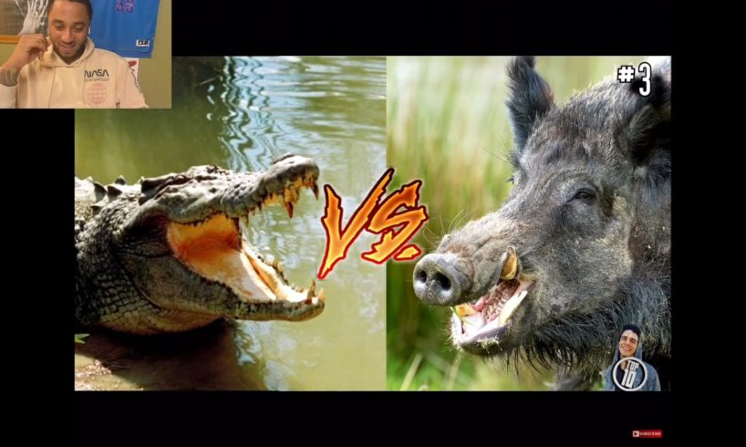 Top 10 Animal Fights Caught On Camera [Reaction]