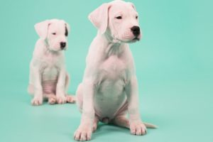 Top 7 Cutest Puppies